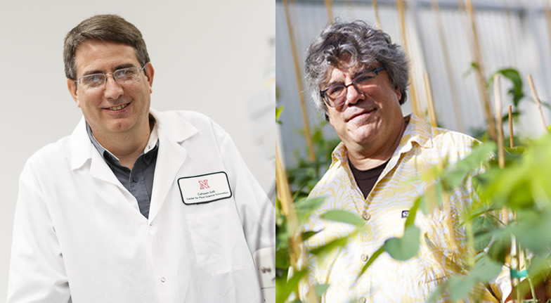 Plant Scientists Aim to Turn Sorghum into Jet Fuel
