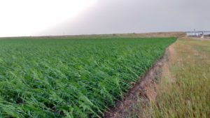 Crops damaged by severe storm in Panhandle and eastern Wyoming