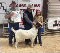 4S Goat Expo Offers Educational Seminar, Show and Sale October 7th and 8th in North Platte