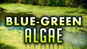 Health Alert Issued for Kirkman's Cove- Alerts Continue at Iron Horse Trail Lake, Willow Creek Reservoir, Rockford Lake
