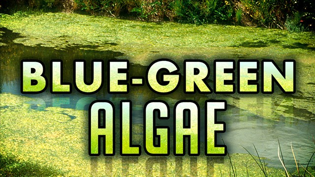 Health alert in effect for Bluestem Lake
