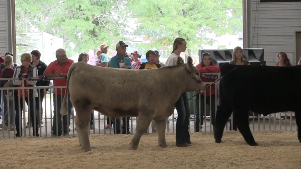 Local kids shine in Scotts Bluff County Fair Market Beef Show