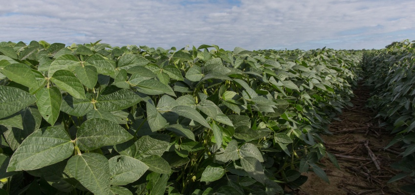 Growing In-Demand Soybeans Can Boost Profitability for Farmers