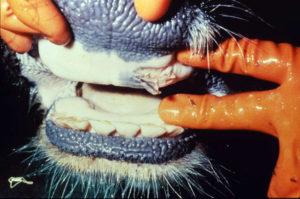 Kansas Exercises Animal Disease Response Preparedness