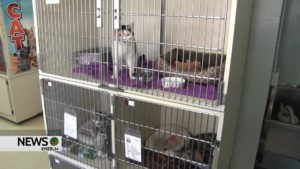 Panhandle Humane Society overflowing with cats