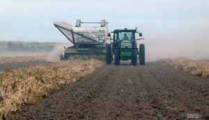 Precipitation Slows and Complicates Dry Bean Harvest