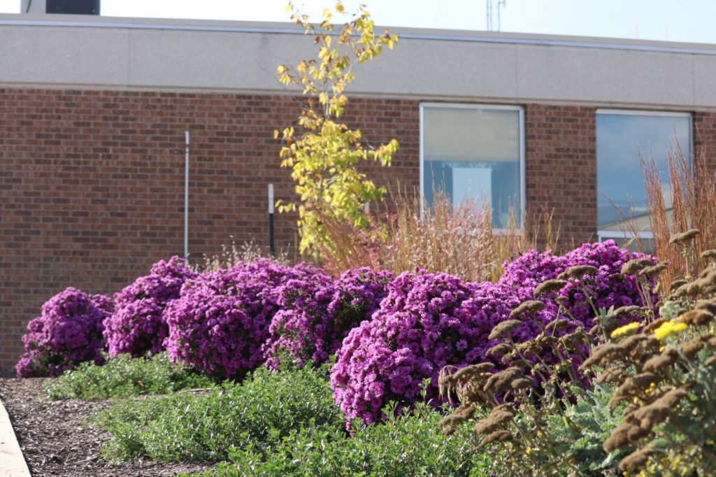 Northfield Elementary honored for beautification efforts