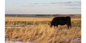 Cattle seminar Nov. 15 at NCTA