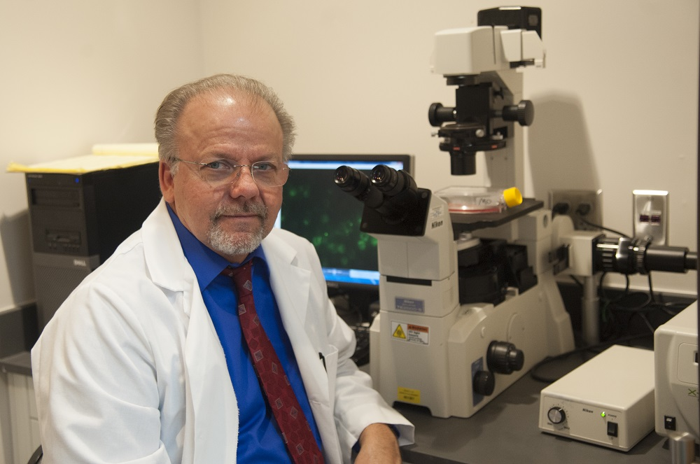 Research creates way to protect pigs from PRRS during reproduction