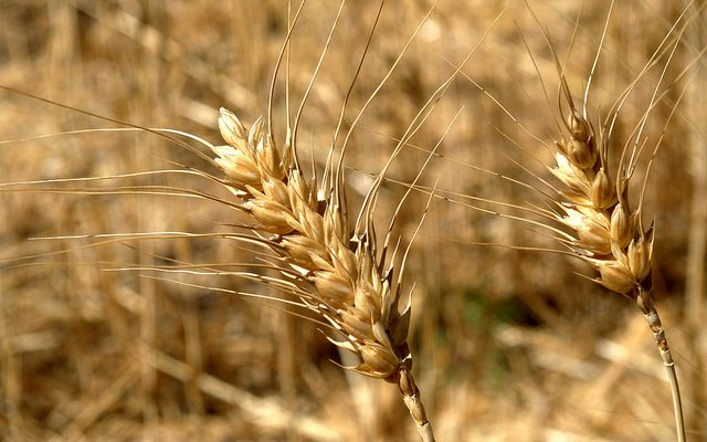 Kansas wheat farmers share their stories with consumers