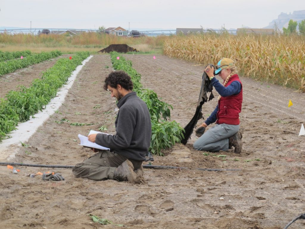 Following harvest, biomulch project enters next phase