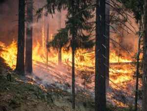 Black Hills wildfire 50% contained at 47,000 acres