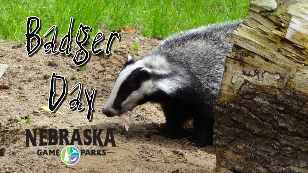 It's not Groundhog Day, it's Badger Day