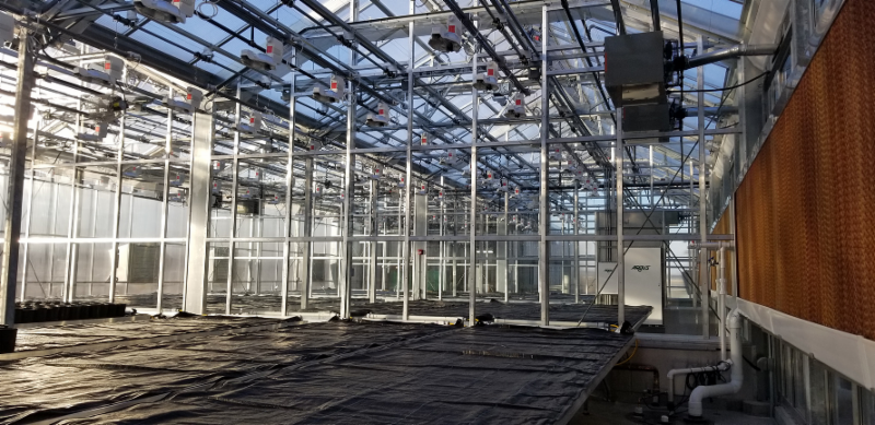 Greenhouse expansion provides home to additional wheat researchers