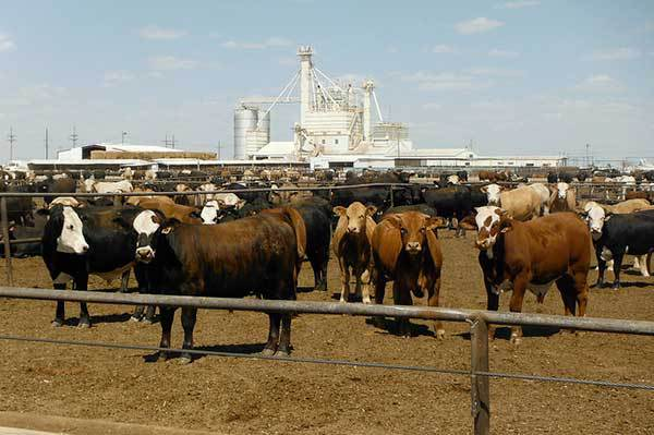 *AUDIO* Cattle on Feed Report
