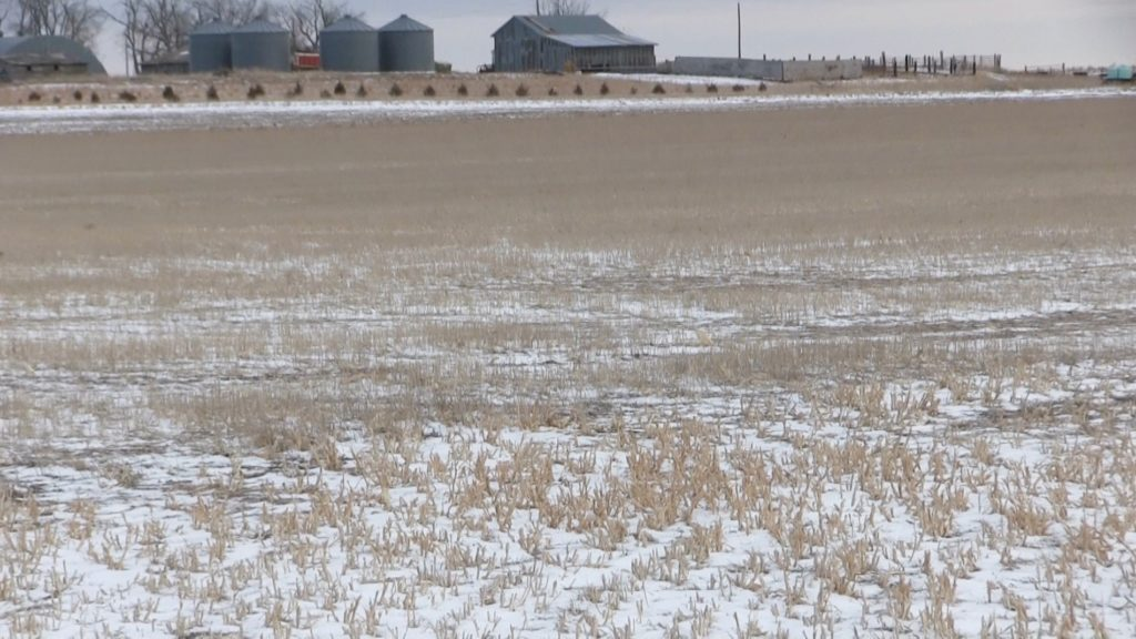 Wheat market gets bump from arctic temperatures