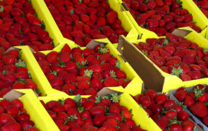 Nearly $3-Billion of Southern California's Urban Economy Linked to Strawberry Farming, Study Shows