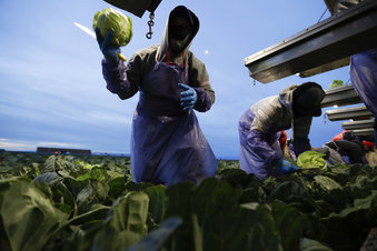 Loss of Foreign Workers Would Hurt Agriculture