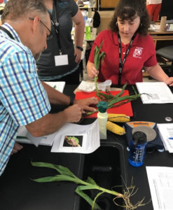 Science Teachers Encouraged to Apply to Kansas Corn's Seed to STEM Summer Workshops