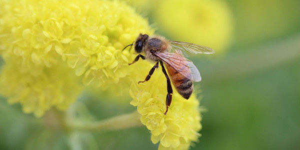 Improving the health of honey bees
