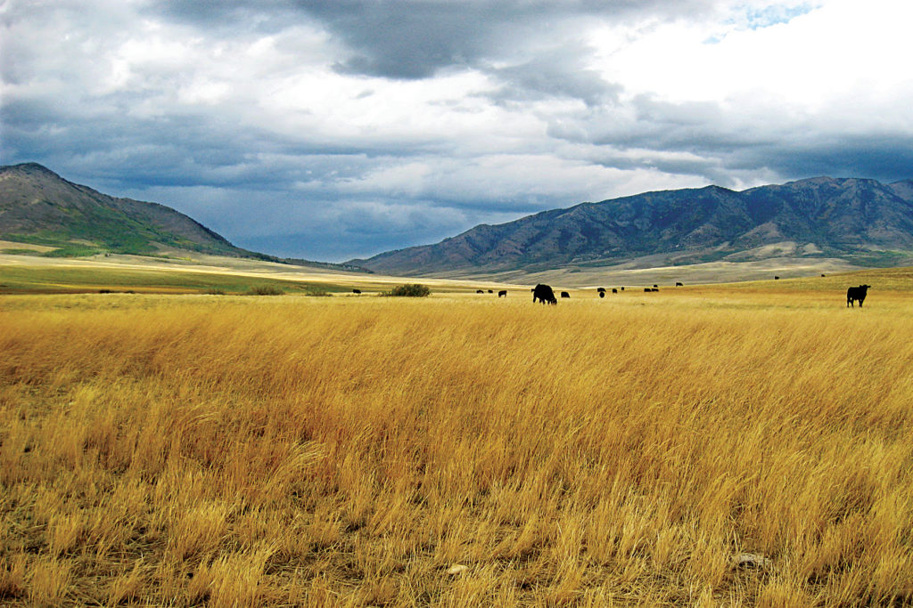 Wyoming Legislature approves funding for ag land conservation projects