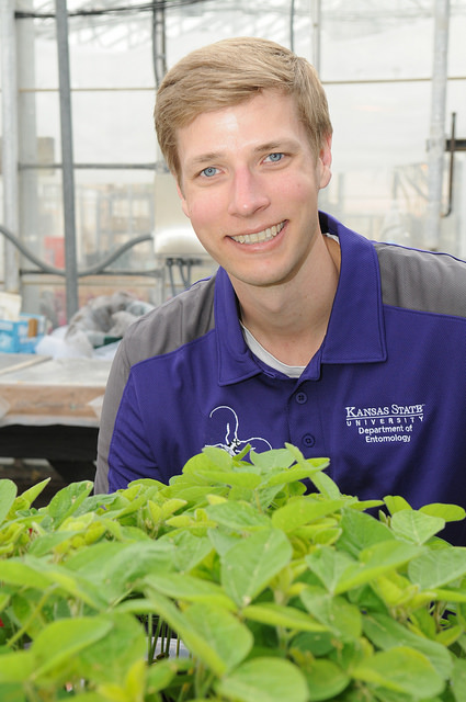 Research aims to find ways to encourage beneficial insects in farm fields