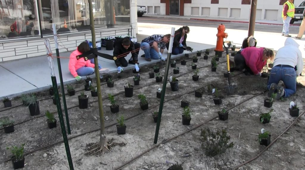 Downtown Scottsbluff bulb out planting leads to Arbor Day recognition