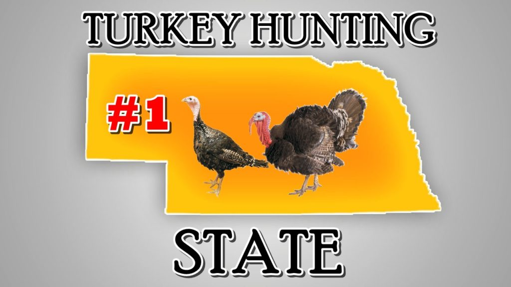 Gov. Ricketts proclaims Nebraska top turkey hunting destination
