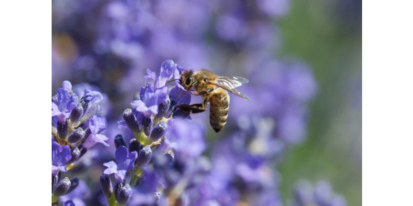 Campus abuzz with pollinator-friendly beds