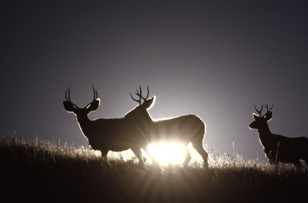 Big game draw permit application period begins June 11