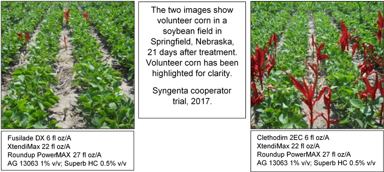 Syngenta herbicide, Fusilade® DX, cleared for tank mix on Roundup Ready 2 Xtend® soybeans