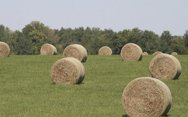 SDDA offers weed-free forage certification