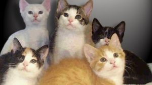 Felony charges considered after nearly 80 cats found in home