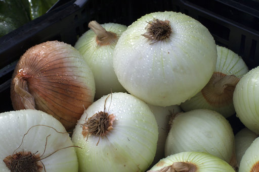 Rancher's onions plundered following social media post
