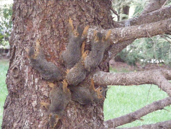 6 young squirrels rescued from ordeal of tangled tails