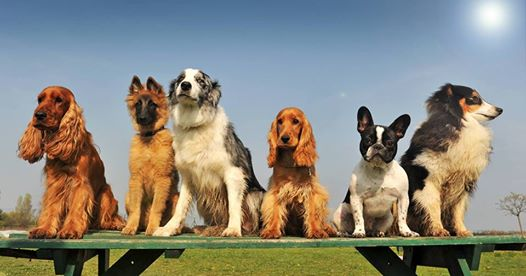 Common Grounds Dog Park Committee to hold public meeting Wednesday night