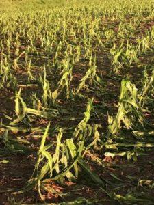 New Nebraska Extension Crop Hail Resources
