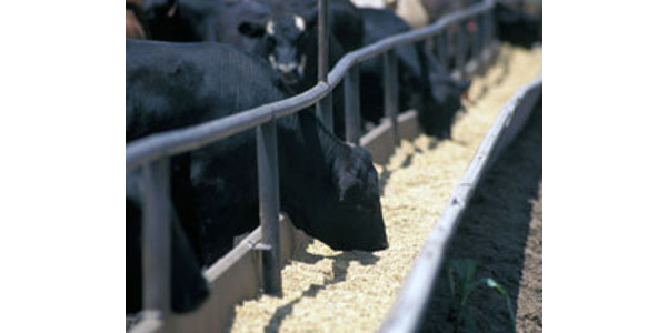 Fundamentals of animal nutrition training