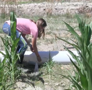 Hot summer could effect irrigation supply
