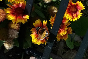 Pollinator week kicks off Monday June 18