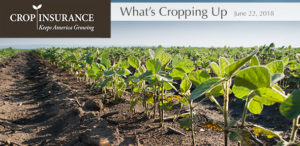 Rural America to U.S. Senate: Do No Harm to Crop Insurance