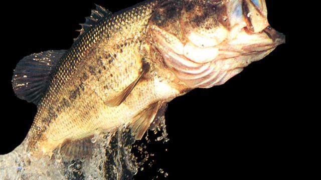 Officials: Disease didn't kill fish in western Nebraska lake