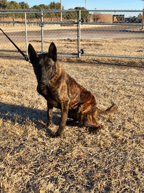 2 new police dogs join Nebraska State Patrol K9 unit