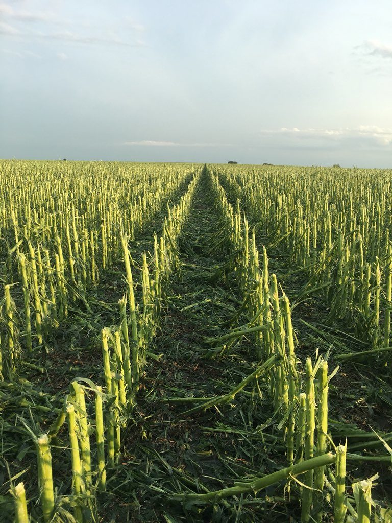 Hail pummels south central Nebraska crops