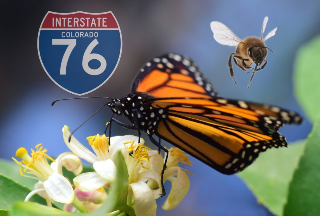 Colorado designates I-76 from Denver to Nebraska as pollinator highway
