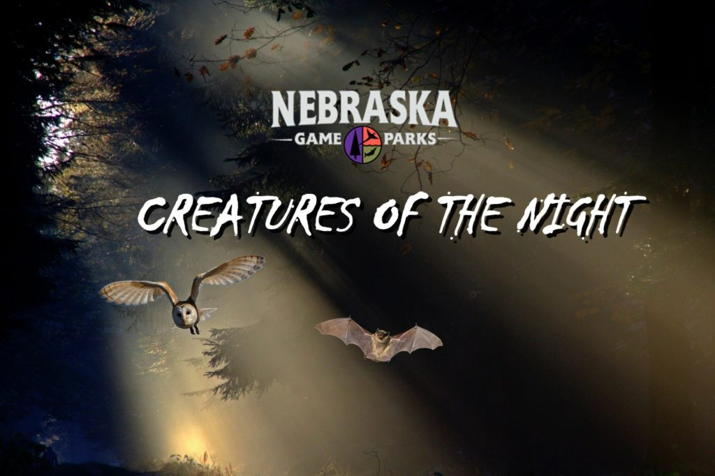 Program to explore 'Creatures of the Night'