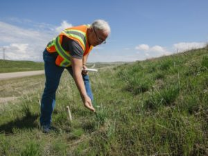 Montana Researchers Pioneer Using Wool for Erosion Control