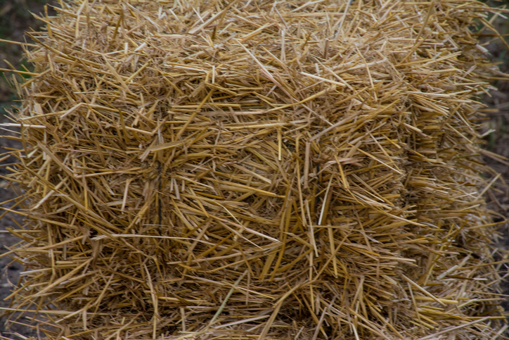 Straw prices soar, piling pressure on northern Europe livestock farmers