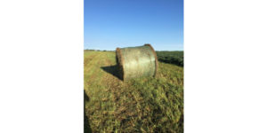 Colorado Department of Agriculture helps those in need of hay