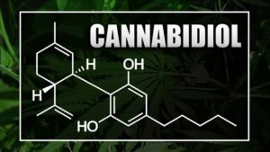 UNMC clinical trial shows cannabidiol benefits